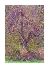 Der verzauberte Apfelbaum