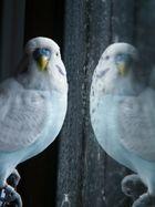 Der 'Vogel'