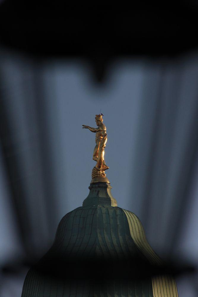 Der Vogel auf der Krone