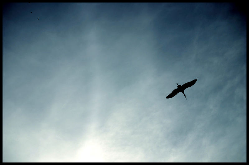 Der Vogel, der die Kinder bringt....