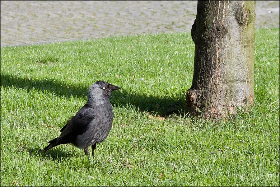 Der Vogel des Jahres 2012