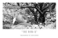 Der Vogel II