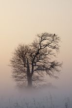 Der Vogel im Nebel