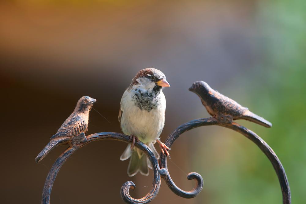 Der Vogel sitzt nicht gern alleine