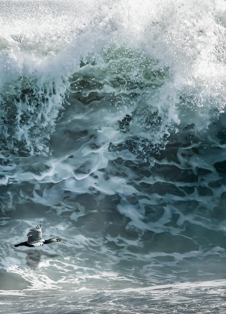 Der Vogel und das Meer **