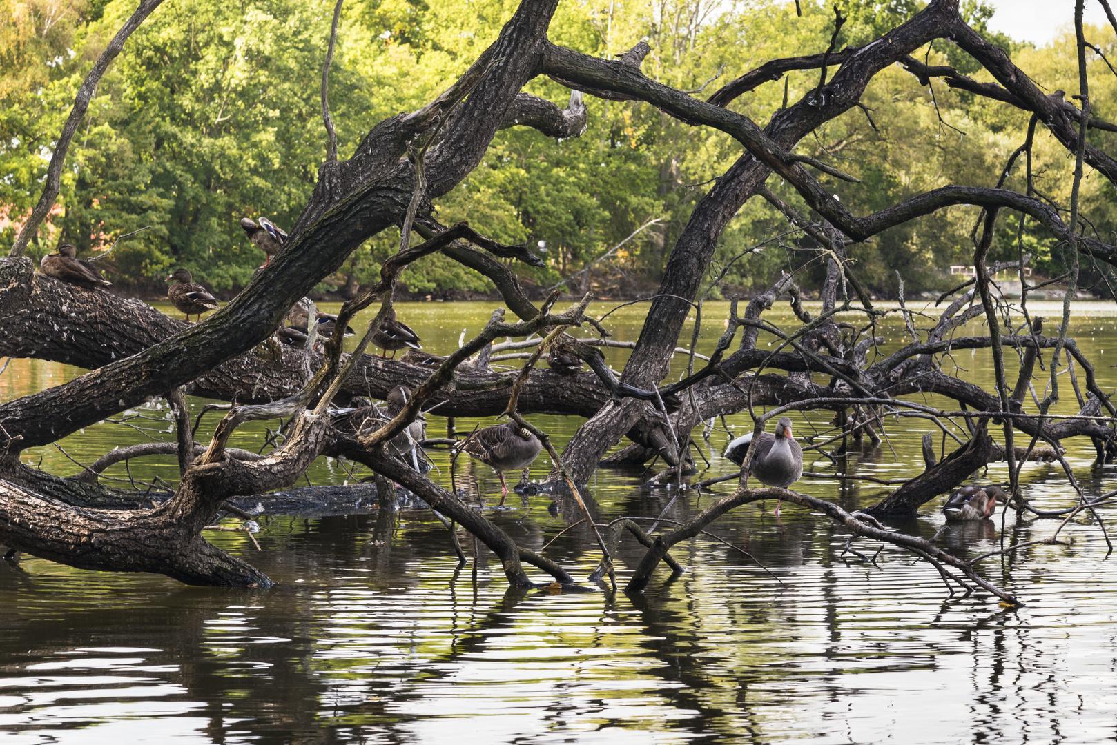 Der Vogelbaum