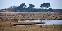 Der Vogelflug  Insel Hiddensee
