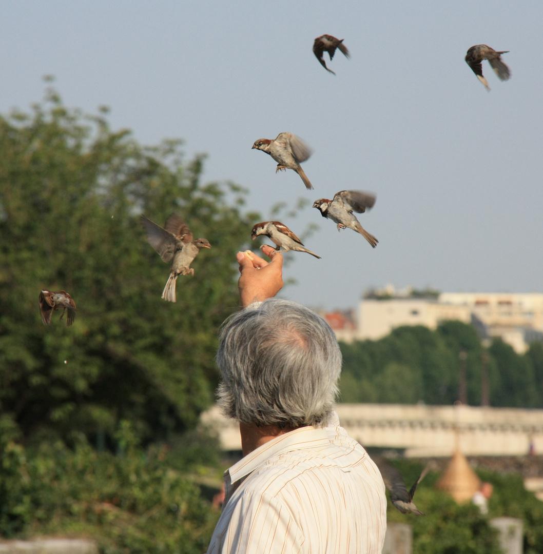 Der Vogelmann