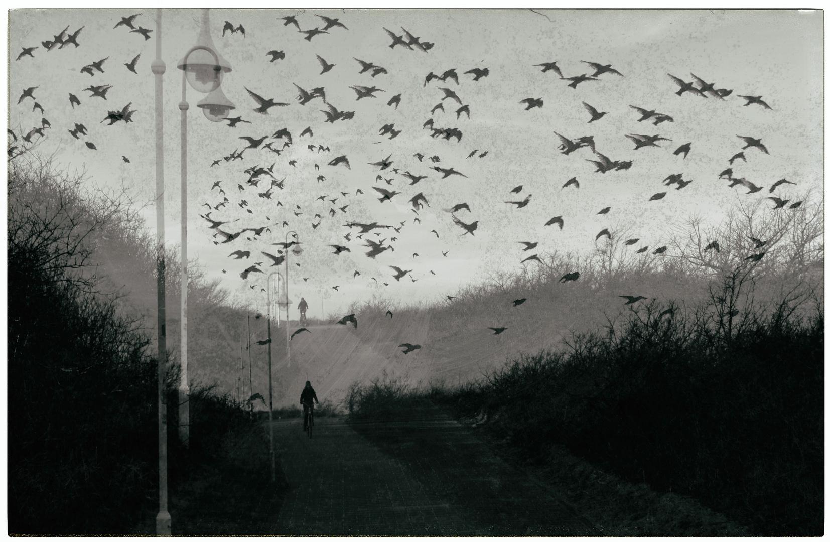 der Vogelschwarm...