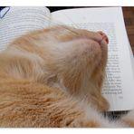 Der Vorleser ...