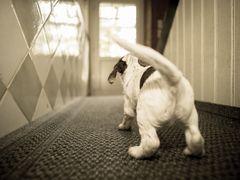 Der Wachhund