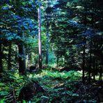 der Wald.....