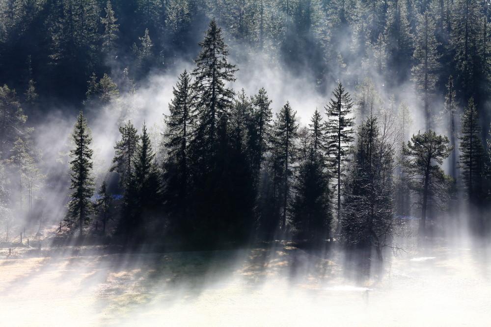 ...der Wald...