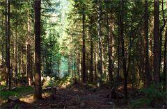 Der Wald am Crestasee