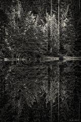 Der Wald am See