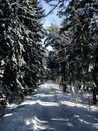 Der Wald auf der Kurischen Nehrung auf dem Weg zum Strand