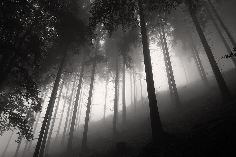 Der Wald.