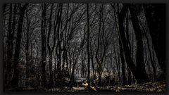 Der Wald - Eine Grenzerfahrung