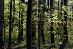 Der Wald grünt!