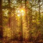 Der Wald im Frühlingserwachen