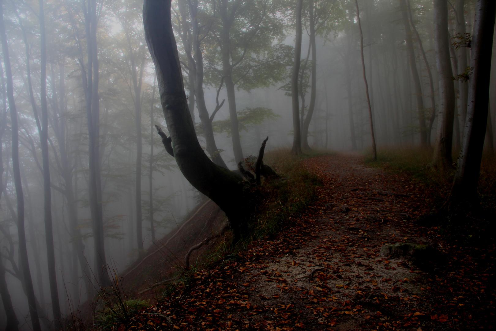 der Wald im Herbst auf Rügen