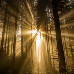 Der Wald im Morgenlicht