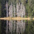 Der Wald im See