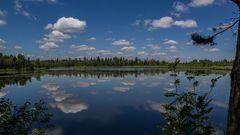 Der Wald im Spiegelsee