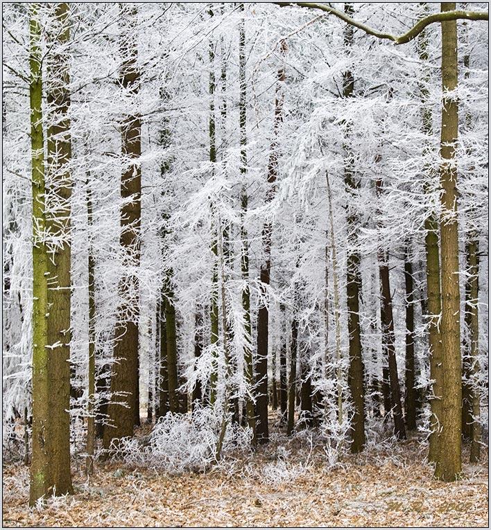 Der Wald im Winterkleid