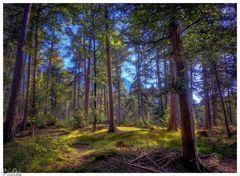 Der Wald in der Nachmittassonne
