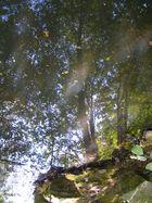 Der Wald in der Pfütze