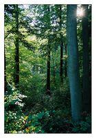...der Wald ist nicht genug...