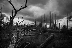 der Wald ist tot, es lebe der Wald