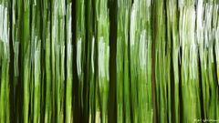 Der Wald mal gestisch