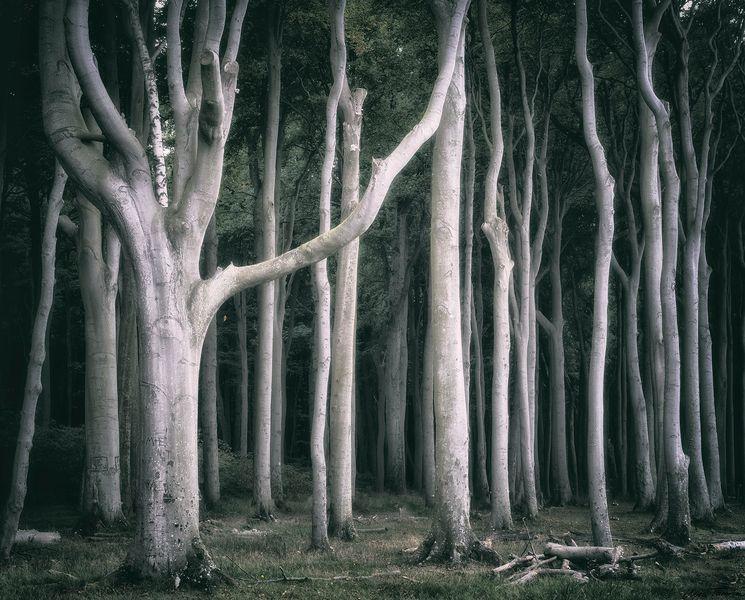 der Wald steht still und schweigend