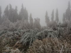 Der Wald stöhnt und ächzt unter der Eislast