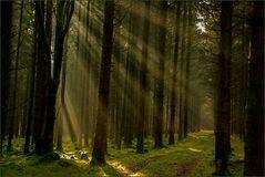 der Wald strahlt