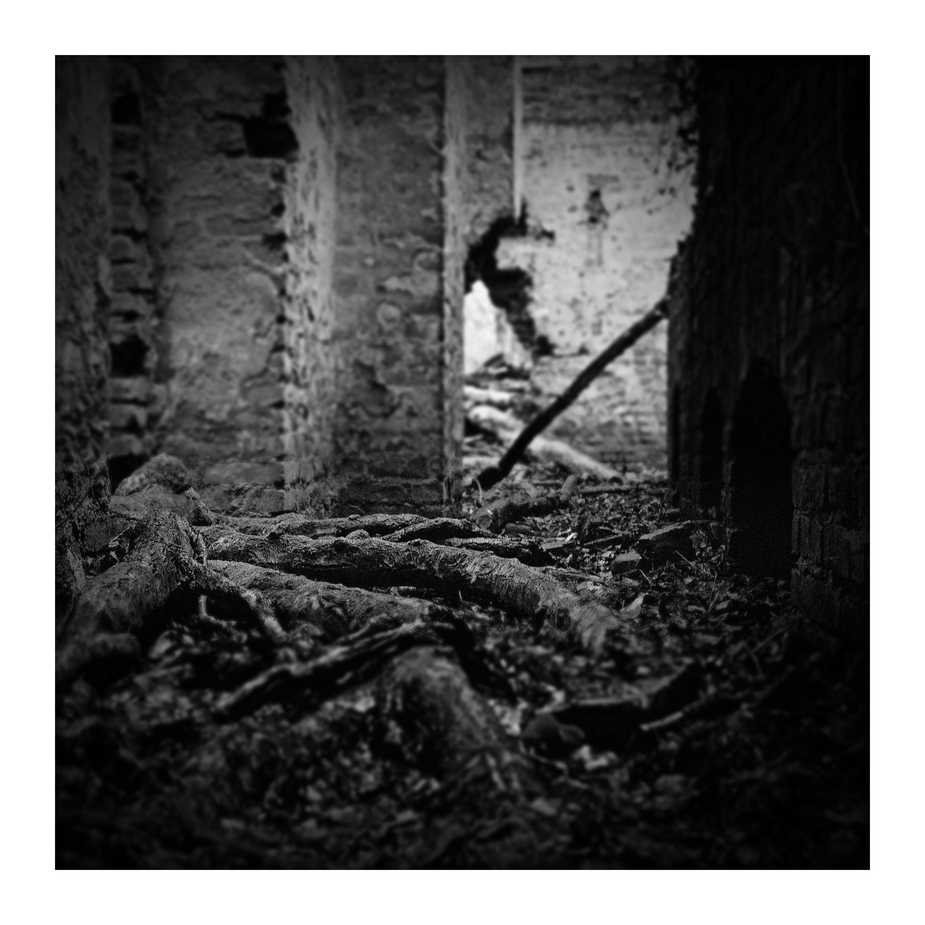 Der Wald streckt seine Fühler aus(2)...