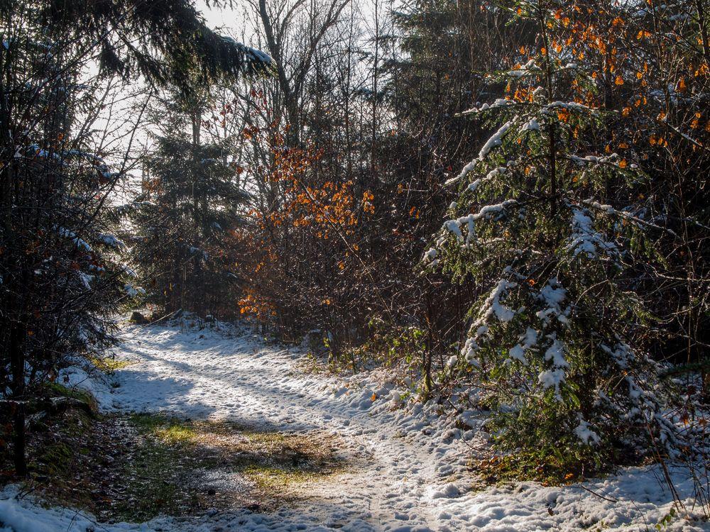 Der Wald taut auf