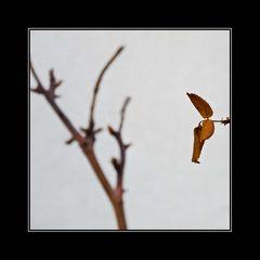 ... der Wald verliert seine Blätter ...