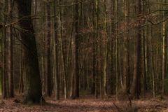 Der Wald voller Bäume