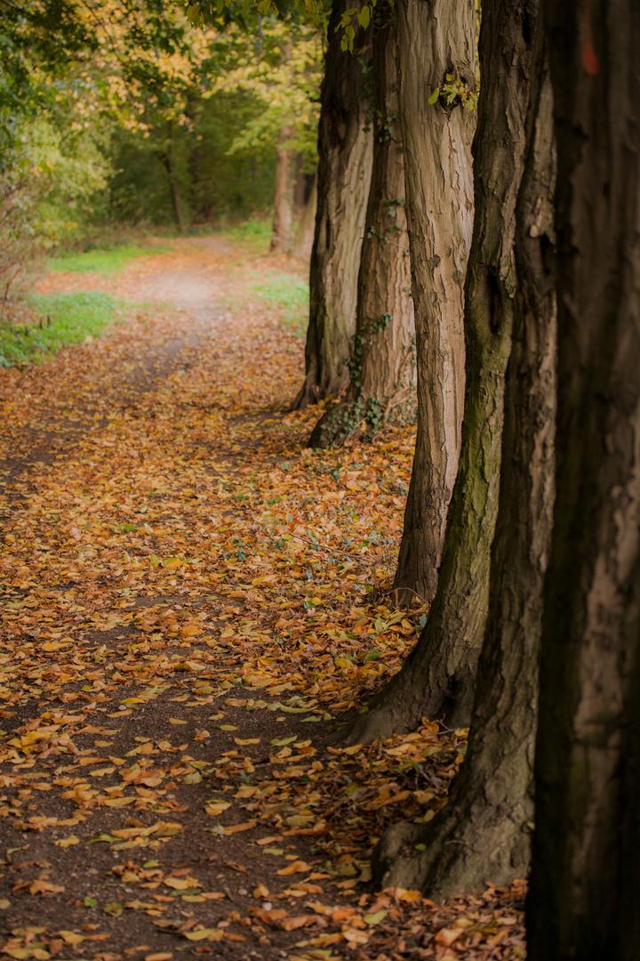 Der Wald vor lauter Bäumen