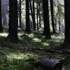 Der Wald vor meiner Haustür