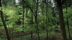 der Waldlaubsängerwald