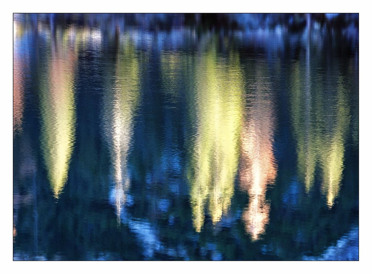 Der Waldrand am See