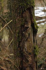 ...der Waldschrat versteckt sich
