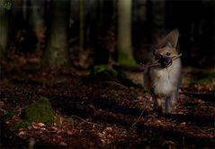 Der Waldtroll