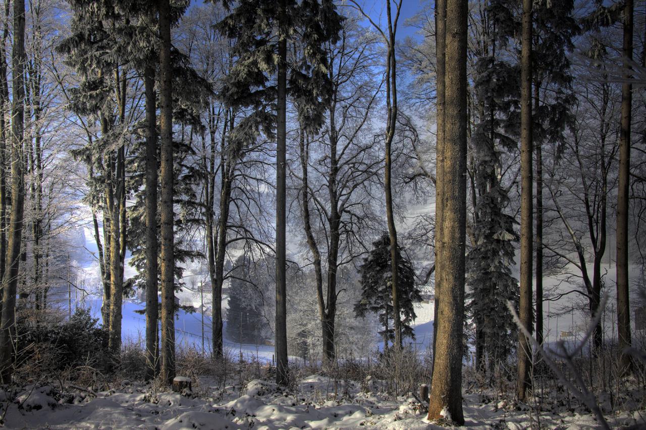 Der Waldvorhang