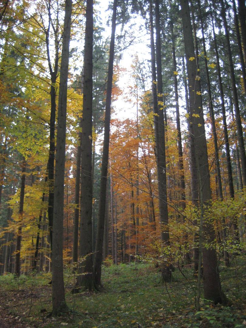 Der Waldweg...