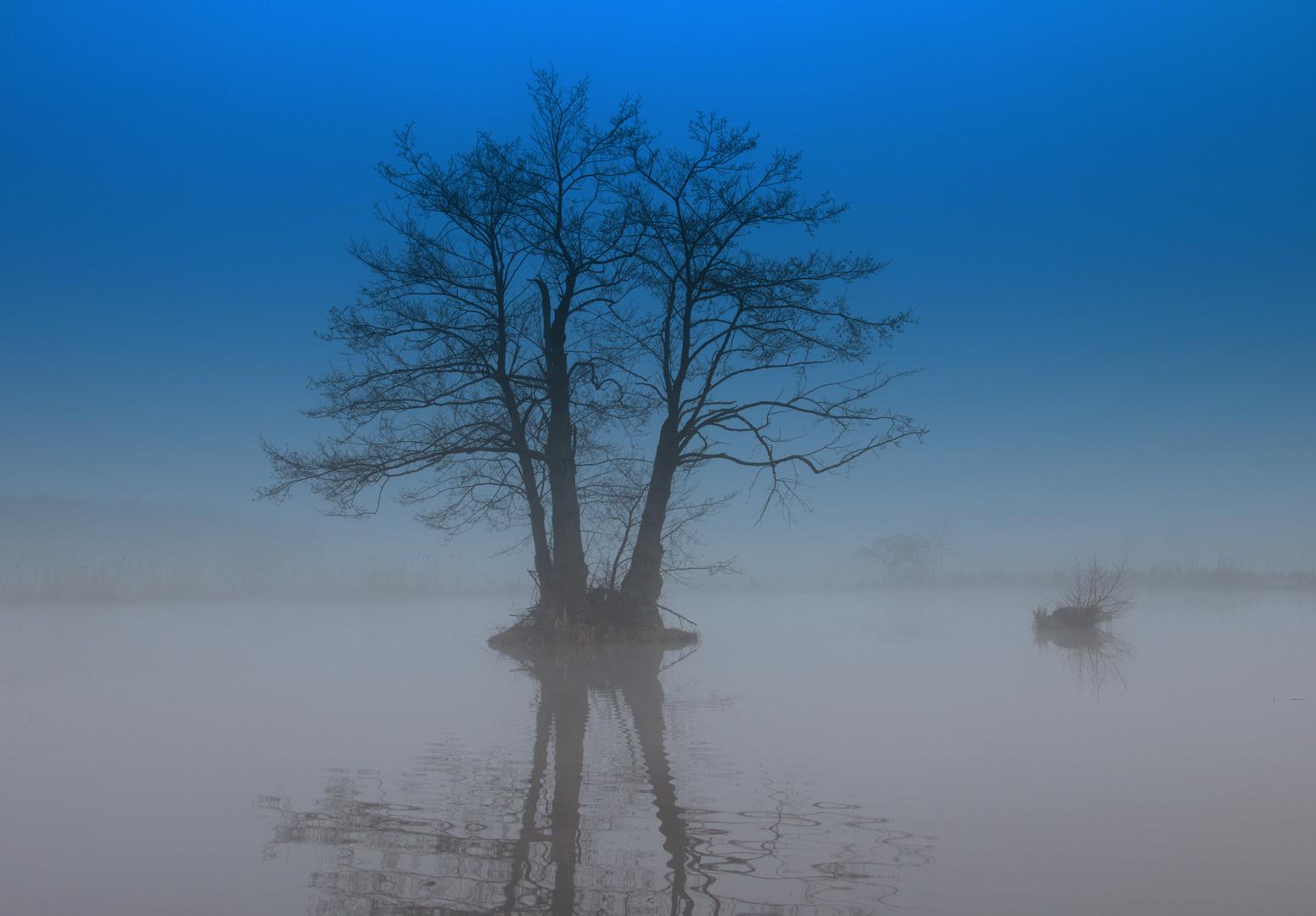 Baum Wasser